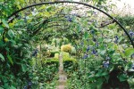 Metal arches with path and clematis