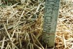 Rhubarb wooden label for kitchen garden