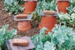 Rhubarb forcing pots