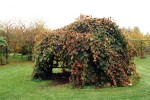 Wooden structure for vines shown in autumn
