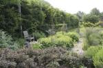 Sara's herb garden in summer