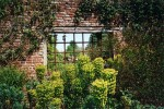 Window in old brick wall with Euphorbia