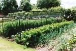 Soft fruit cage for kitchen garden