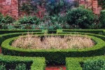 Box hedging/Buxus sempervirens