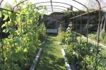 Arches in Sara's kitchen garden